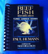 Buy Reef Fish Identification Guide by Paul Humann Used