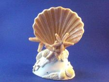 Buy Beach Seashell Starfish Design Wedding Cake Topper 7""