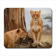 Buy African Lioness Lion Wild Cat Photo Computer Mouse Pad