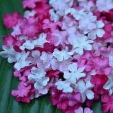 "Buy 100 MIXED MULBERRY PAPER ARTIFICIAL MINI PETAL FLOWERS PINK TONE DIA. 2 cm/ 0.8"""