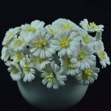 Buy 50 MULBERRY PAPER OFF WHITE DAISY FLOWER CRAFT WEDDING 2.5 cm./ 1 INCH
