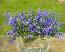 Buy 12 PCS ARTIFICIAL MINI FRUIT BLUE VIOLET GREEN FLOWER PLANT PICK LOT WEDDING