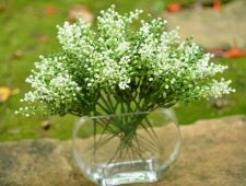Buy 24 PCS ARTIFICIAL MINI FRUIT WHITE GREEN FLOWER PLANT PICK LOT WEDDING HOMEDECOR