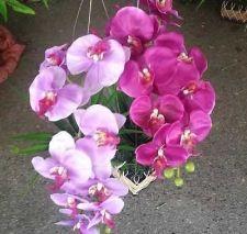 "Buy Orchid Silk Arrangement Flower 24"" Phalaenopsis in wicker hanger pot"