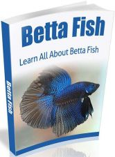 Buy Betta Fish Ebook + 10 Free eBooks With Resell rights ( PDF )