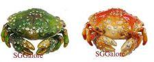 Buy RUCINNI Swarovski Crystals BeJeweled CRAB Trinket Jewelry BOX
