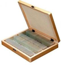 Buy Prepared Covers Glass Slides Set Lab Life Science Biology Tissue Wooden Storage