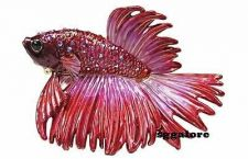 Buy Collectible RUCINNI Swarovski Crystals BeJeweled Beta Betta FISH Trinket Box