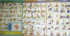 Buy THAI MASSAGE TRAINING POSTERS Spa Therapy Body Muscles Pain Relief 3 Versions