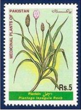 Buy Pakistan 1999 Plantain Medicinal Plants Series (1v) MNH (US-01)