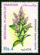 Buy Pakistan 2001 Peppermint Medicinal Plants Series (1v) MNH (US-01)