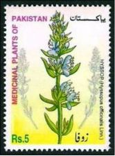 Buy Pakistan 2002 Hyssop Medicinal Plants Series (1v) MNH (US-01)