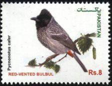Buy Pakistan 2013 Red-Vented Bulbul Bird (1v) MNH (US-01)