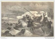 Buy NORTH POLE - FIGHTING AGAINST SEA LIONS engraving from 1868