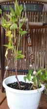 """Buy brown porcelain and silver plated chain 18"""" handmade plant hanger"""