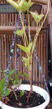 "Buy star and moon sodalite magnesite and czech glass handmade 18"" plant hanger"