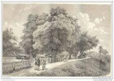 Buy SUMATRA - HOUSES IN DJAMBI - engraving from 1880