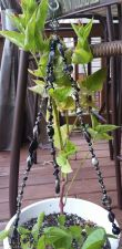 """Buy star black and silver glass and acrylic handmade 18"""" plant hanger"""