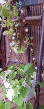 """Buy brown porcelain various shades and yellow glass 18"""" handmade plant hanger"""