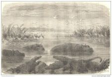 Buy AFRICA - THE GREAT LAKES WITH FAUNA NEAR PONGOLA - engraving from 1863