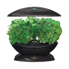 Buy Miracle-Gro AeroGarden 7-Pod Indoor Garden with Gourmet Herb Seed Kit, Black