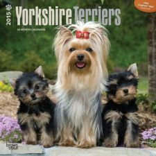 Buy Yorkshire Terriers 2015 Square 12x12 (Multilingual Edition)