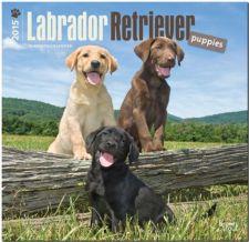 Buy Lab Puppies 2015 Square 12x12 (Multilingual Edition)