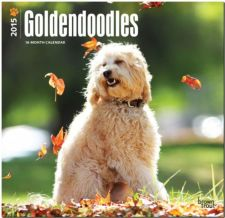 Buy Goldendoodles 2015 Square 12x12