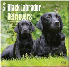 Buy Labrador Retrievers, Black 2015 Square 12x12 (Multilingual Edition)