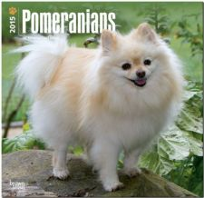 Buy Pomeranians 2015 Square 12x12 (Multilingual Edition)