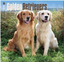 Buy Golden Retrievers 2015 Square 12x12 (Multilingual Edition)