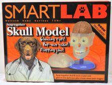 Buy SmartLab Snap- Together Skull Model