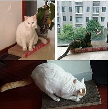 Buy Honeycomb Pet Toy Corrugated Paper Cat Scratching Pad/Board (49.5*22.5*4cm)