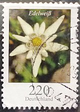 Buy Stamp Germany 2006 Definitive Issue - Flowers Edelweiss (Leontopodium nivale) 2.20 Eu