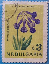 Buy Stamp Bulgaria 1963 Flora Primula deorum 3 stotinka