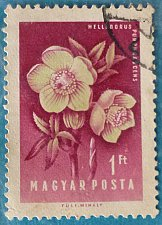 Buy Stamp Hungary 1958 Commemorative Flower Hellebore (Helleborus purpurascens) 1 Florint