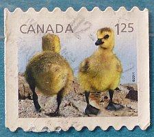Buy Stamp Canada 2011 Fauna - Baby Wildlife Canada Goose (Branta canadensis) $1.25