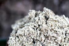 Buy 1 kilo Imphepho (Helichrysum petiolare) Shredded Herb