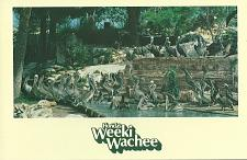 Buy WEEKI WACHEE PELICAN ORPHANAGE FLORIDA POSTCARD UNUSED USA