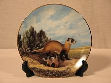 Buy Animal Collector Plate Black Footed Ferret Endangered Will Nelson