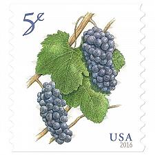 Buy 2016 5c Deep-Purple Pinot Noir Grapes, Coil Scott 5038 Mint F/VF NH