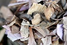 Buy 14g Pink Sacred Lotus (Nelumbo nucifera) Dried Flower Tea Smoke herb Blue