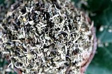 Buy 3.5g Damiana Leaf (Turnera diffusa) Certified Organic & Kosher Certified