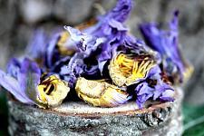 Buy 14g Blue Lotus Dried Whole Flower (Nymphaea Caerulea)