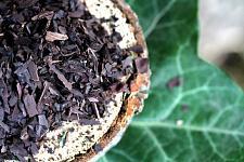 Buy 1g Alkanet Root (Alkanna tinctoria) Certified Organic & Kosher Herb