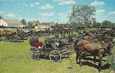 Buy MENNONITE HORSES BUGGIES MARTIN'S OLD ORDER HOUSE POSTCARD