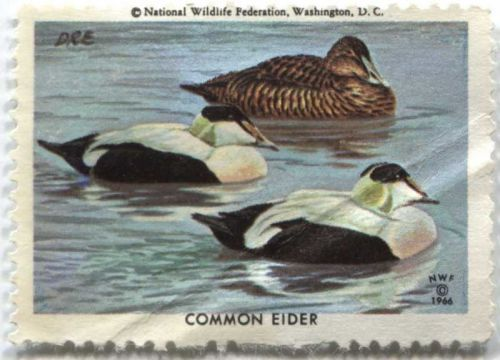 1966 National Wildlife Federation Washington DC Common Eider Duck Stamp