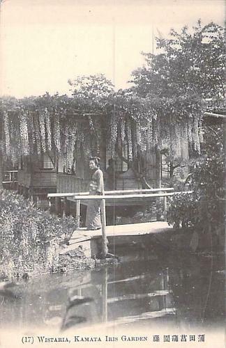 Wistaria Kama Iris Garden Vintage Japanese Postcard
