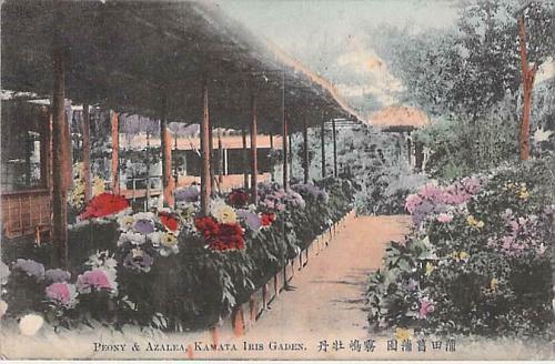 Peony and Azela Flowers, Kamata Iris Garden Hand Color Vintage Japanese Postcard