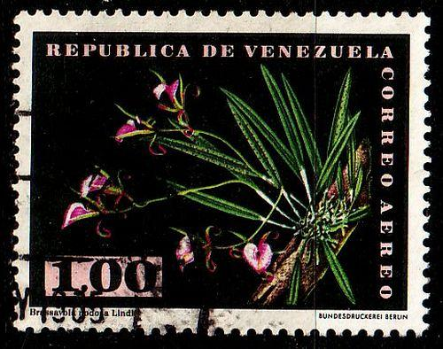 VENEZUELA [1962] MiNr 1447 ( O/used ) Pflanzen